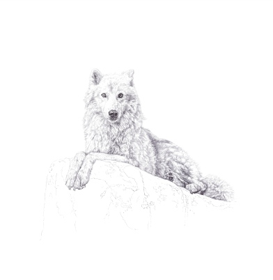 'Atka', signed and numbered luxury Archival Pigment Print
