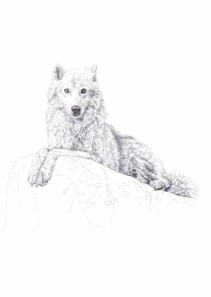 'Atka', black Biro drawing, 2013 by Jane Lee McCracken