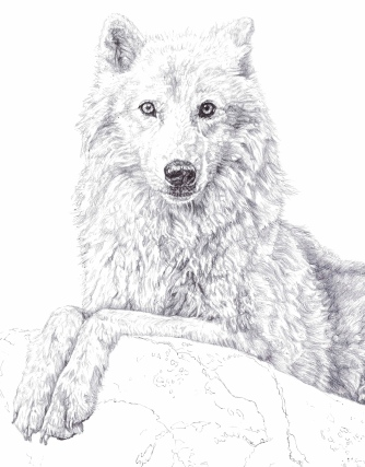 'Atka', detail of black Biro drawing, 2013