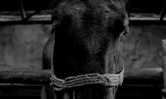 'Horse', 'Turin Horse', Béla Tarr, 2011