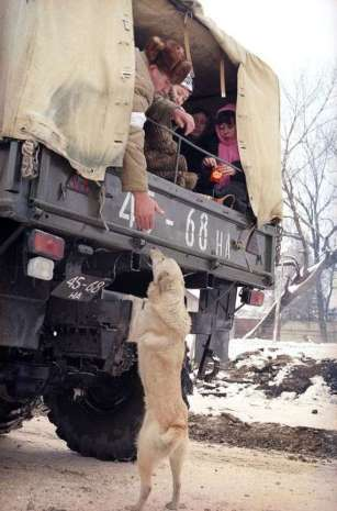 Russian man, Grozny, Chechnya says goodbye to his dog, 1995. Chechen forces. (AP Photo)
