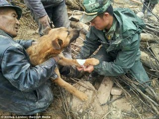 Dog rescued after 3 days buried under rubble after earthquake Lalu Village in Hetuo Township, Dingxi, China 2013