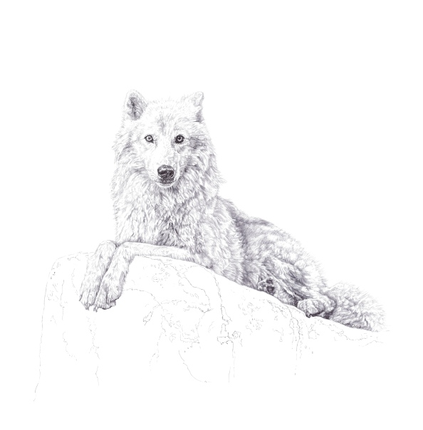 'Atka', 2013, original black Biro drawing