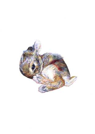 'Brown Bunny', 2012 colour Biro drawing by Jane Lee McCracken