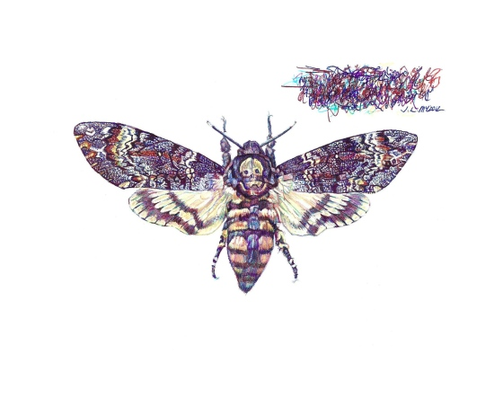 'Death's-head Hawkmoth', 2012, colour Biro drawing by Jane Lee McCracken