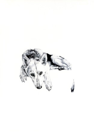'Lily', 2009, original black Biro drawing by Jane Lee McCracken