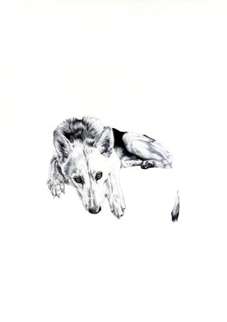 'Lily', 2009, original black Biro drawing by Jane Lee McCracken