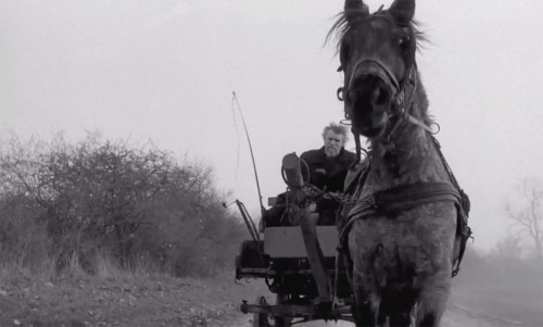 Opening scene, 'Turin Horse', Béla Tarr, 2011