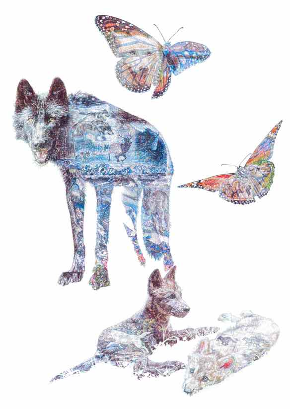 'American Dream', colour Biro drawing, 2014 Jane Lee McCracken exclusively for the Wolf Conservation Center, New York