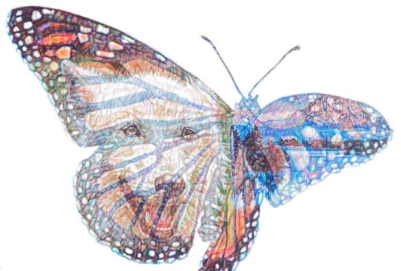 """American Dream', colour Biro drawing, detail - Atka and Monarch Butterfly"
