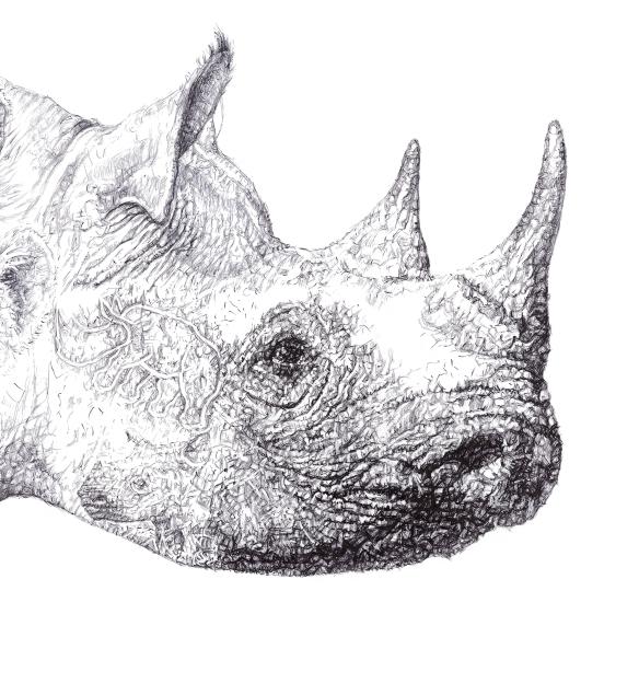 'Rhino 2014', Starlit Rhino detail