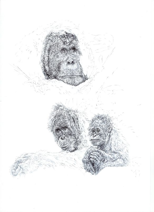 Third Prize, signed and numbered print of 'Orangutans' by Jane Lee McCracken