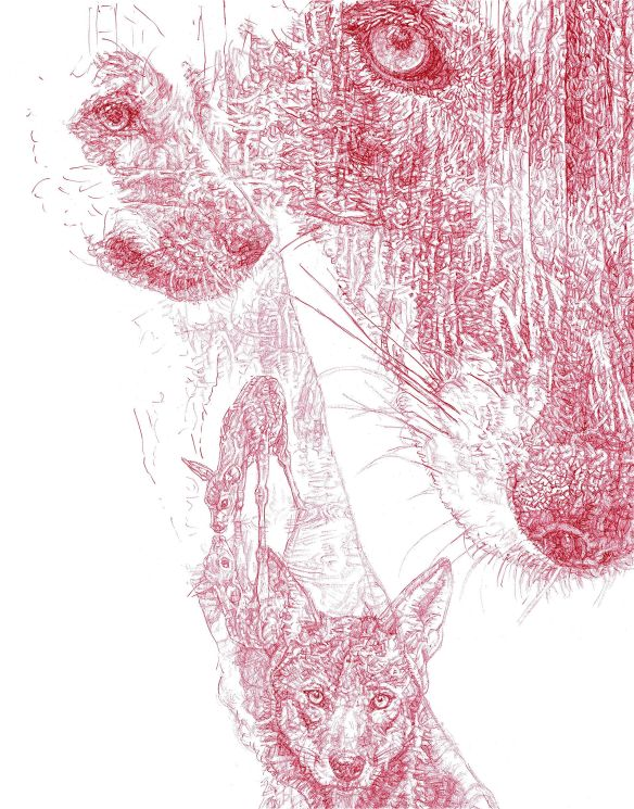Detail of 'Red Wolf' red Biro drawing, Jane Lee McCracken