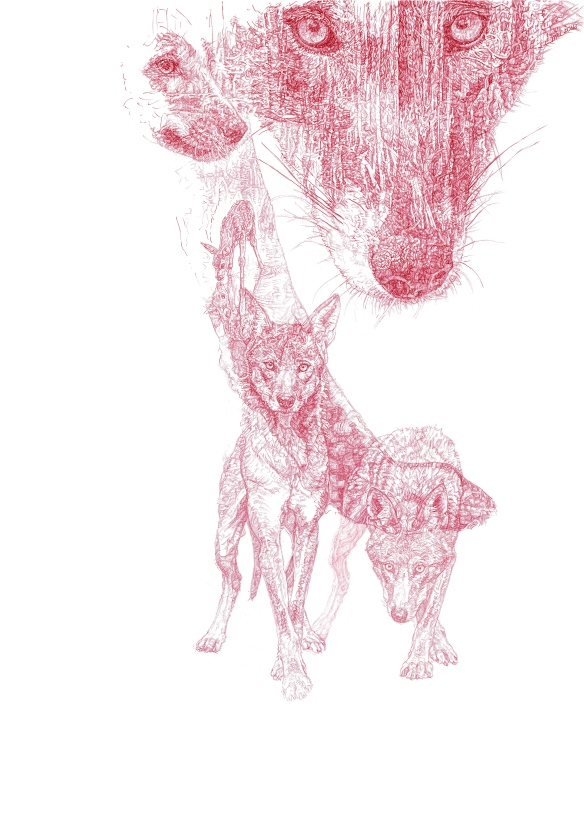 'Red Wolf' 2016 original red Biro drawing by Jane Lee McCracken for the Wolf Conservation Center